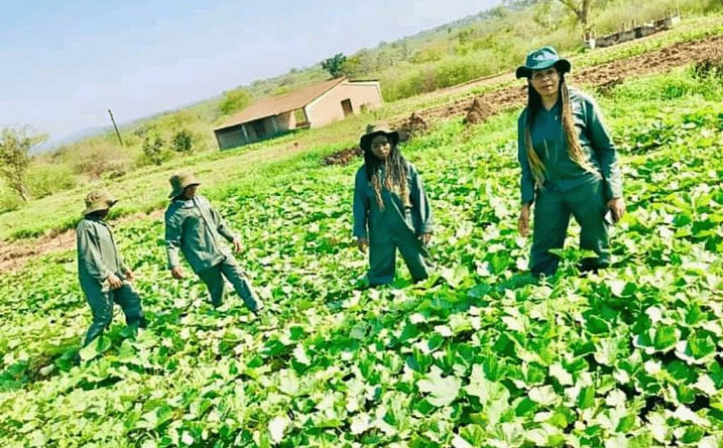 Swatsakani_Farming